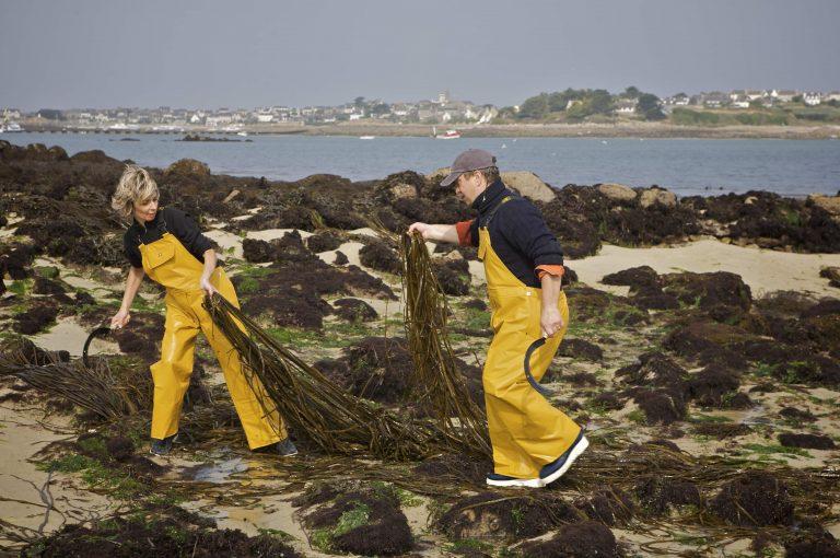 Les activités dans le Finistère : ALGOPLUS
